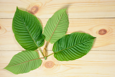 74472385 - mitragyna speciosa or kratom leaves on wood background