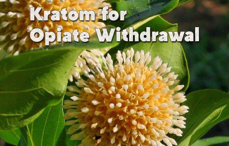 Kratom-for-Opiate-Withdrawal