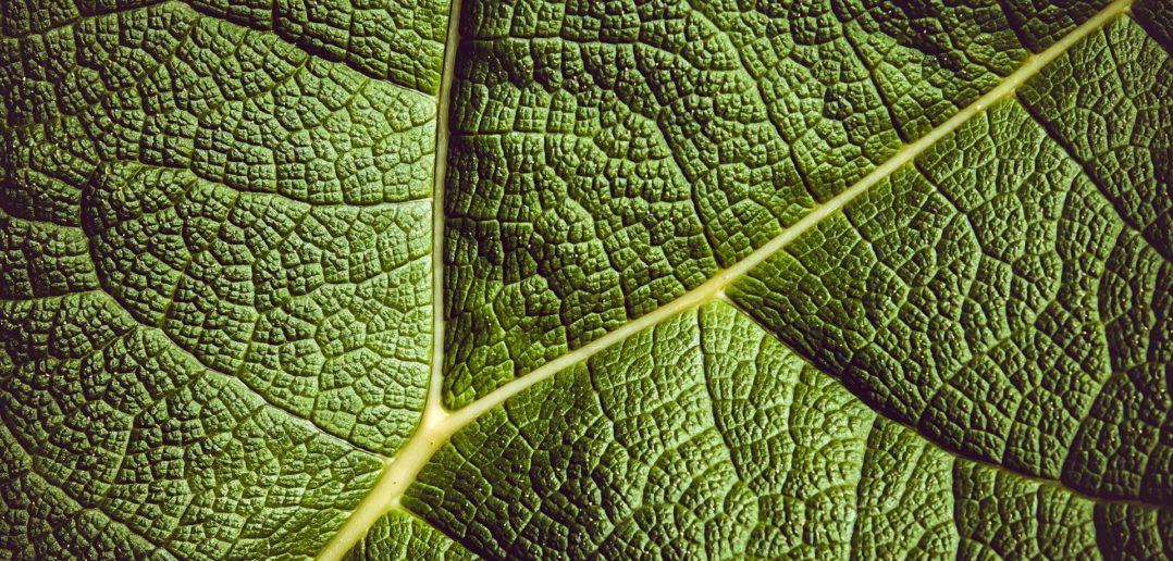 leaf-3504797_1920-1078x516