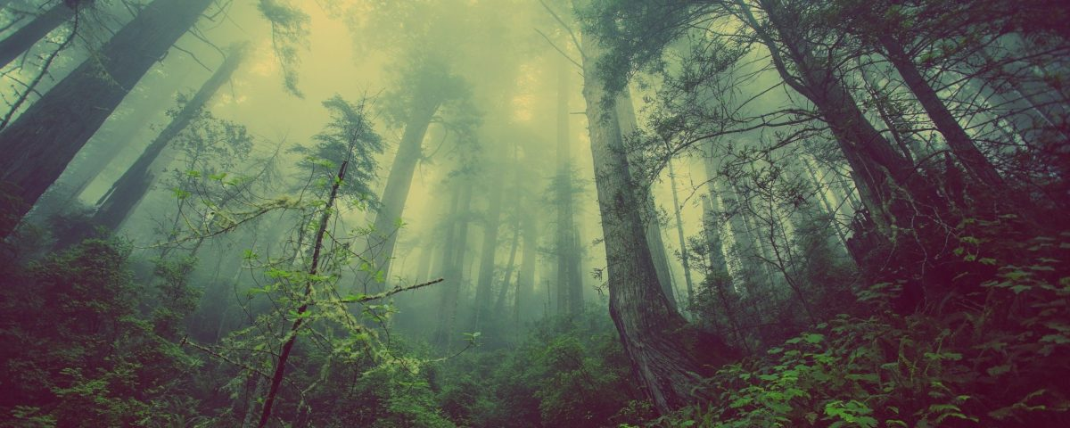 forest-931706_1920-1200x480